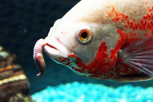 Best Fish Food Reviews 1