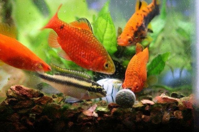 Best Fish Food Reviews 2