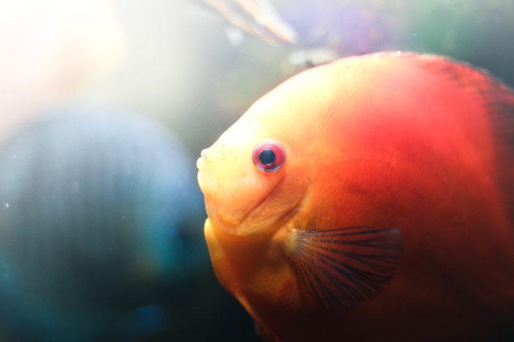 Best 55 gallon fish tank stands