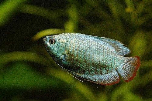 best aquarium thermometers in 2019 reviews fish tank advisor
