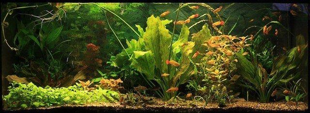 Best Rated Aquarium Filters Reviews