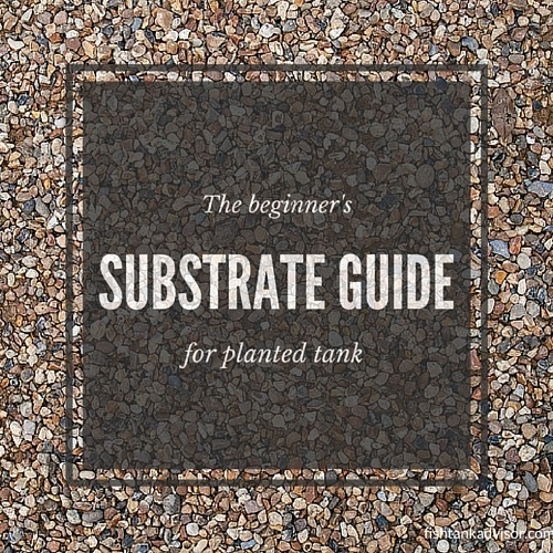 Beginner's substrate guide for planted tank