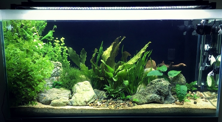 High-tech planted tank Day30