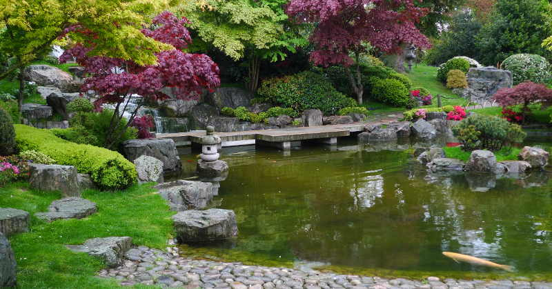 A tutorial to help you choose a good pump for your backyard pond