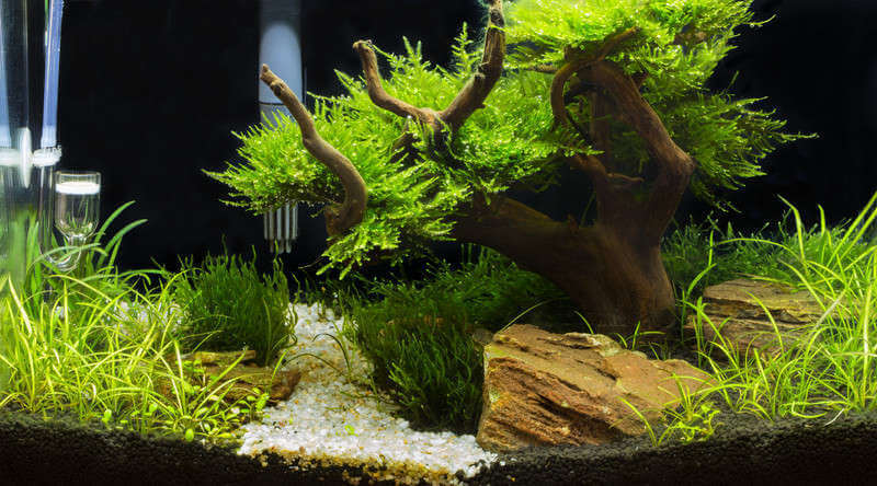 Aquarium Driftwood Best Safest Types For Your Tank