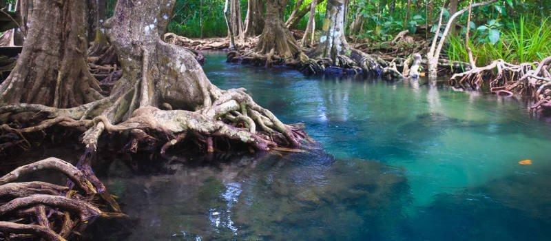 Aquarium Driftwood Best Safest Types For Your Tank